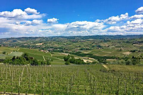 Aussicht auf die Weinberge im Piemont