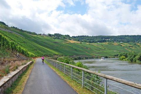 Radweg zwischen Weinberge und Mosel
