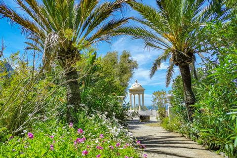 Palmen in Son Marroig Mallorca