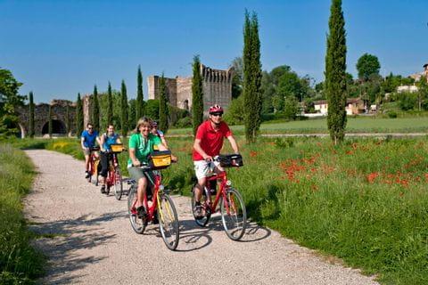 Cyclists next to a poppy meadow