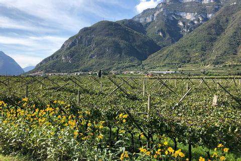 Impressionen von den Südtiroler Weingärten
