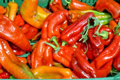 Rote und orange Paprikaschoten auf einem Markt in der Extremadura