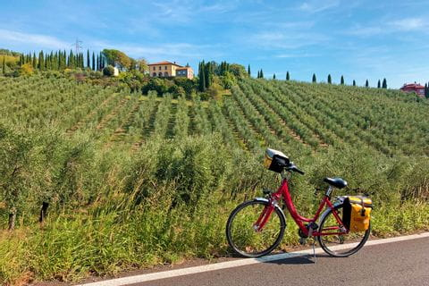 Bike in the tuscan wineyards