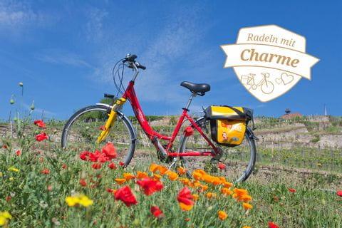 Fahrrad in den Weinbergen