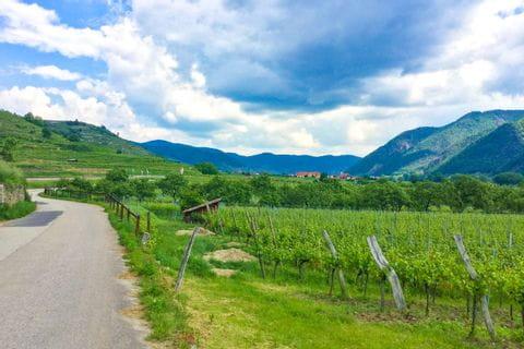 Weinlandschaft Wachau