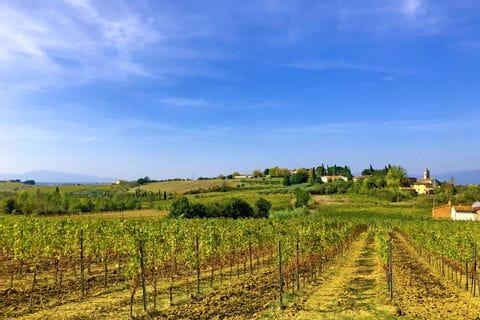 Weingarten nahe Vinci