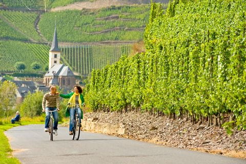 Cycle path on the Moselle