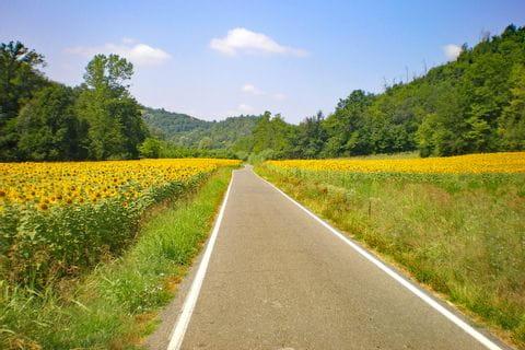 Straße durch Sonnenblumenfeld