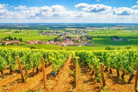 Traumhafte Ausblicke auf die Weinreben im Burgund