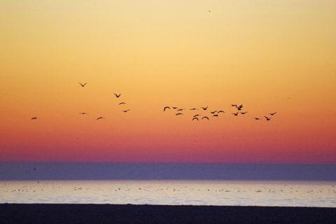 Möwen im Sonnenuntergang