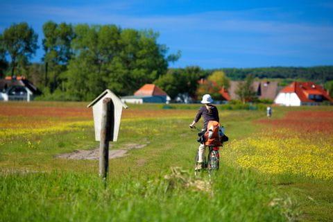 Radweg mit Radfahrer auf Usedom
