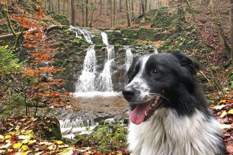 Sabines Hund Finn vor einem Bach