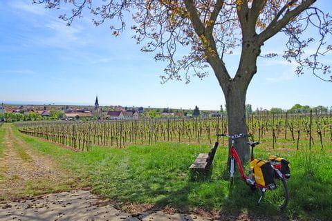 Kurze Pause bei der Radtour entlang der Deutschen Weinstraße