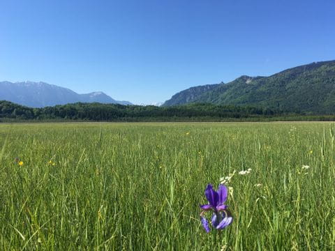 Meadow with one flower