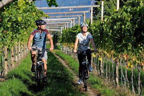 Wine yards with cyclists