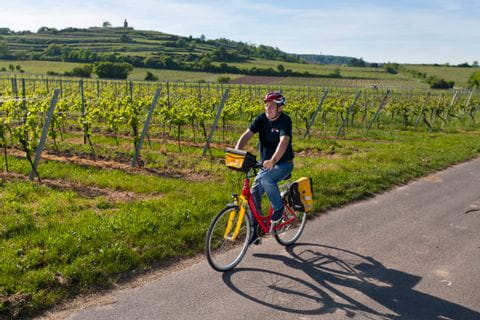 Cycle path through the grapevines