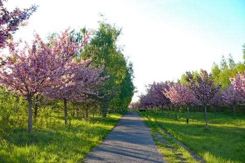 cycle path in spring