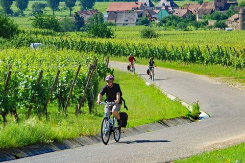 Radfahrer in den Weinbergen bei Kayserberg