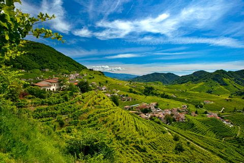 Panoramic view over the vineyards