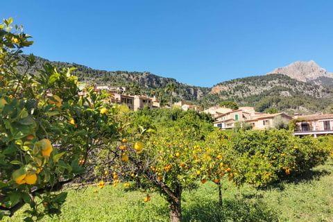 Orangenbäume in Fornalutx