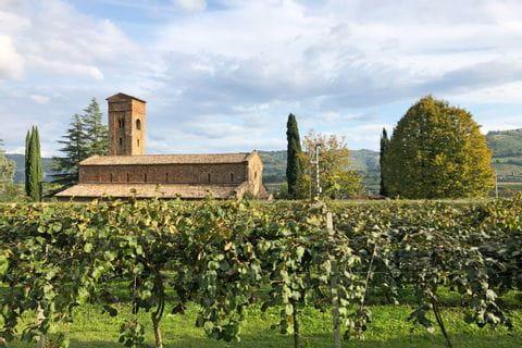 Vineyard along the cycle path