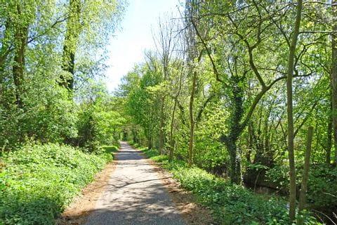Schöner Radweg durch den Wald bei der Pfälzer Weinsternfahrt