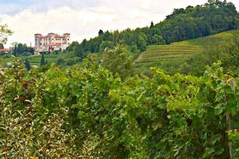Castle inbetween vineyards