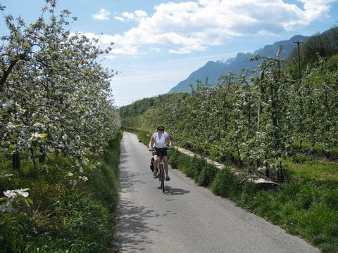 Appleblossoms in South Tyrol