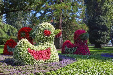 Insel Mainau Blumenfiguren