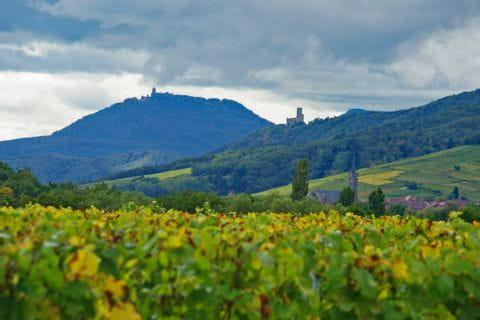 Blick auf die Burgen und über die Landschaft von Blienschwiller