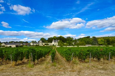 Vineyards in Chenonceaux along the Loire cycle path