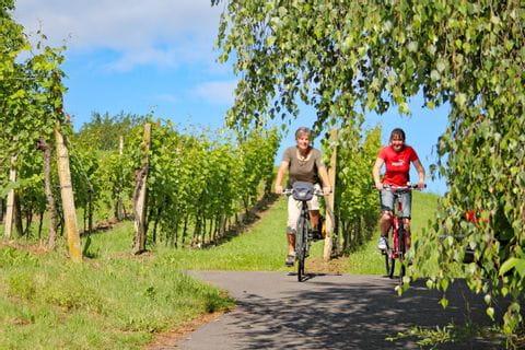 Cycle path through vineyards