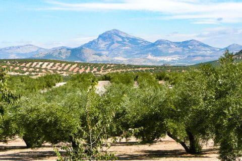 Blick in die weitläufige Landschaft Andalusiens