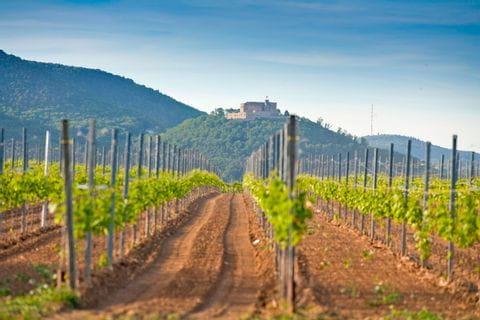 Pfälzer Wald und Weinreben