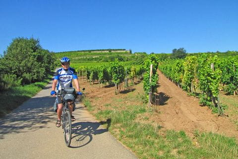 Cyclist in the vineyards in Palatinate