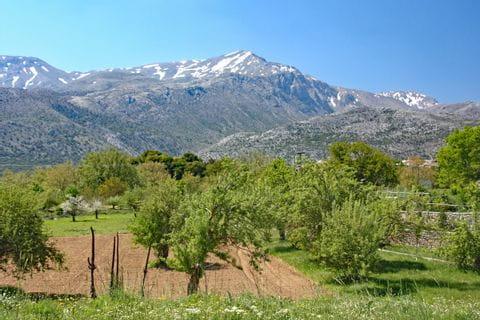 Olivenhaine und Berge