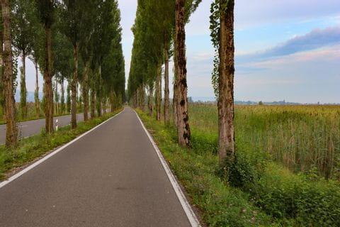 Alleenstraße auf die Insel Reichenau