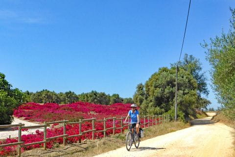 Cyclist passes a sea of red flowers