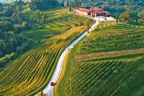 Streets leads through vineyards