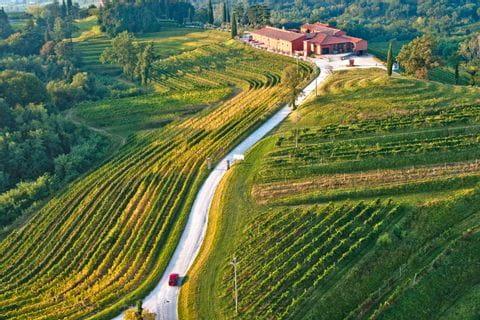 Straße führt durch Weinberge
