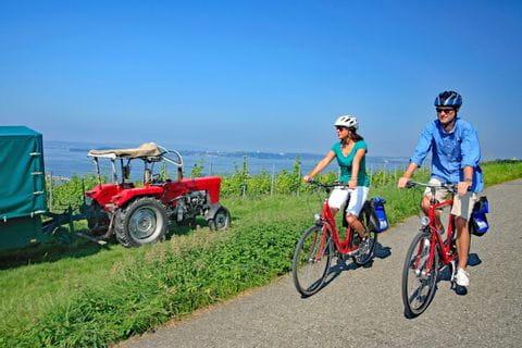 Radfahrer radeln entlang des Bodenseeradwegs