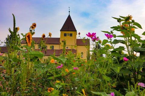 Insel Reichenau Blumen und Kirche im Hintergrund