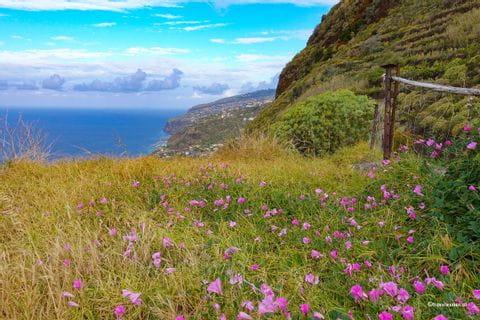 Blumenwiese auf Madeira