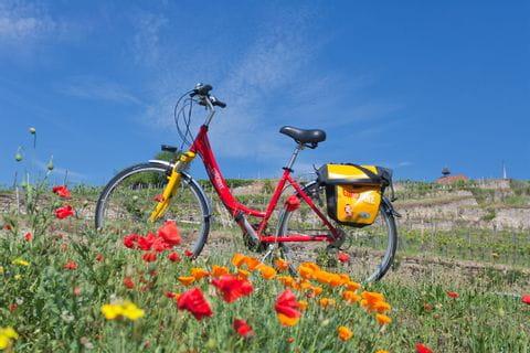 Fahrrad auf einer Blumenwiese