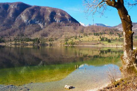 Bohinjksko Jezero Ufer