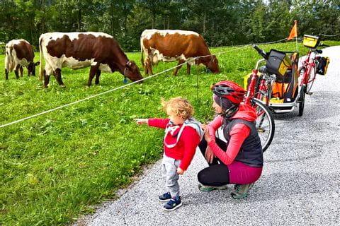 Weidende Kühe am Tauern-Radweg
