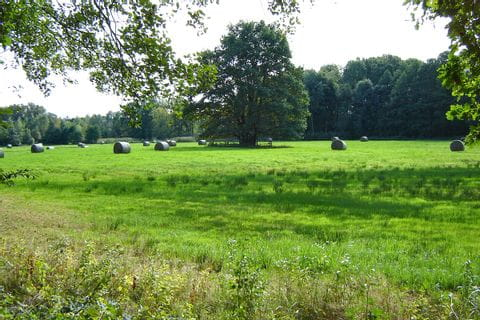 Meadow with hay bales