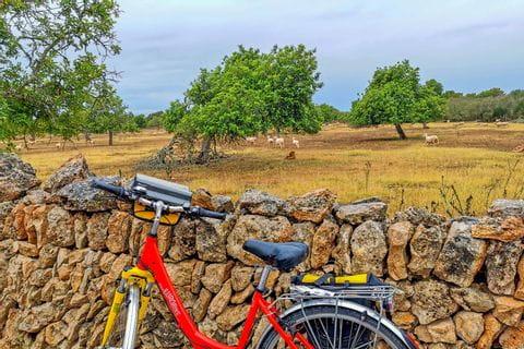 Mit dem Rad Mallorca erkunden