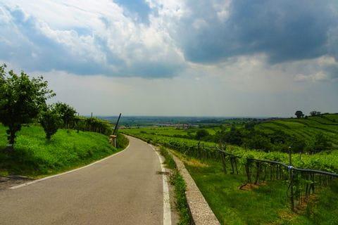 Radweg nach Vicenza entlang der Weinreben