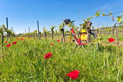 Eurobike bike in the vineyards